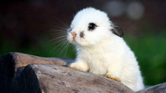 cute-bunny