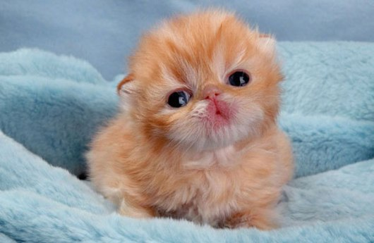 cute-kitten